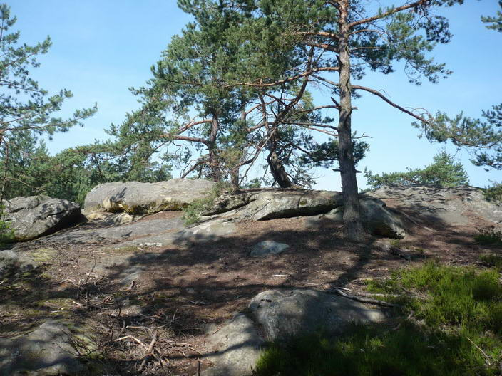 Borovicové lesy
